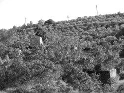 bosque de la mina bn