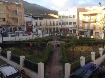 quitando arboles de la Plaza_02