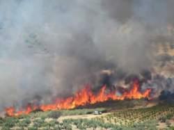 incendio cañamero 170815 (8)