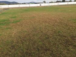 campo de fútbol estado del cesped (2)